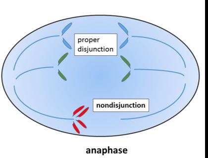 illustration of nondisjunction